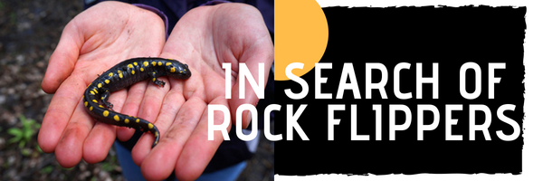 IN SEARCH OF ROCK FLIPPERS (1)